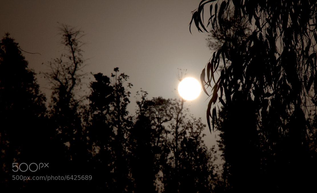 Photograph Untitled by Hitesh Bhadani on 500px