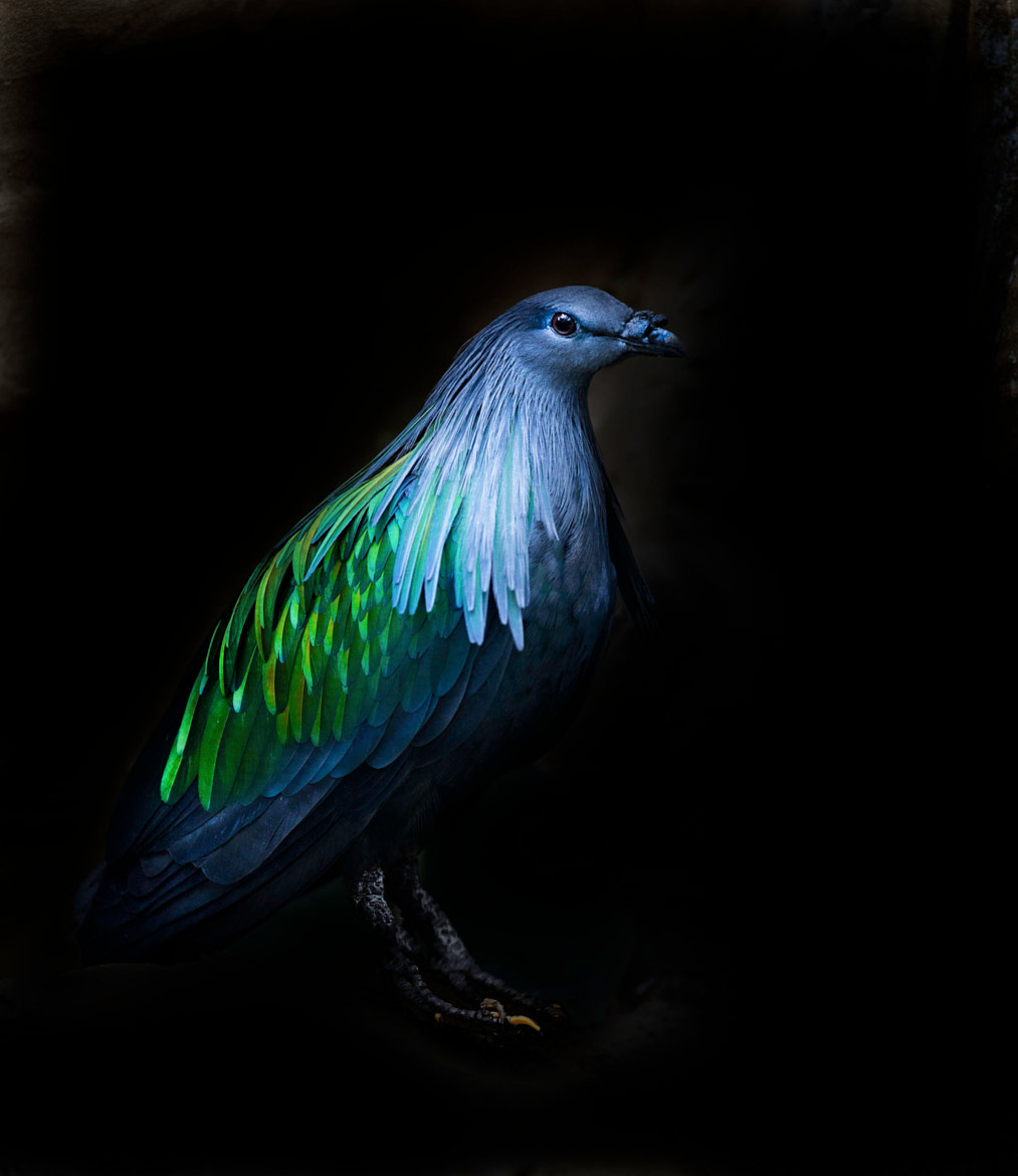 Photograph Green and Blue by Sue Demetriou on 500px