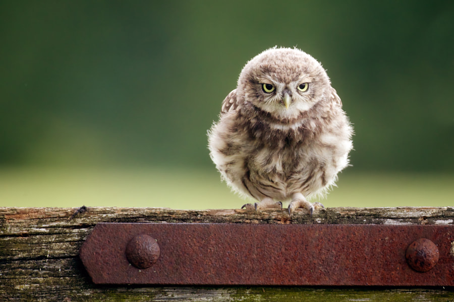 Photograph a little frown by Mark Bridger on 500px