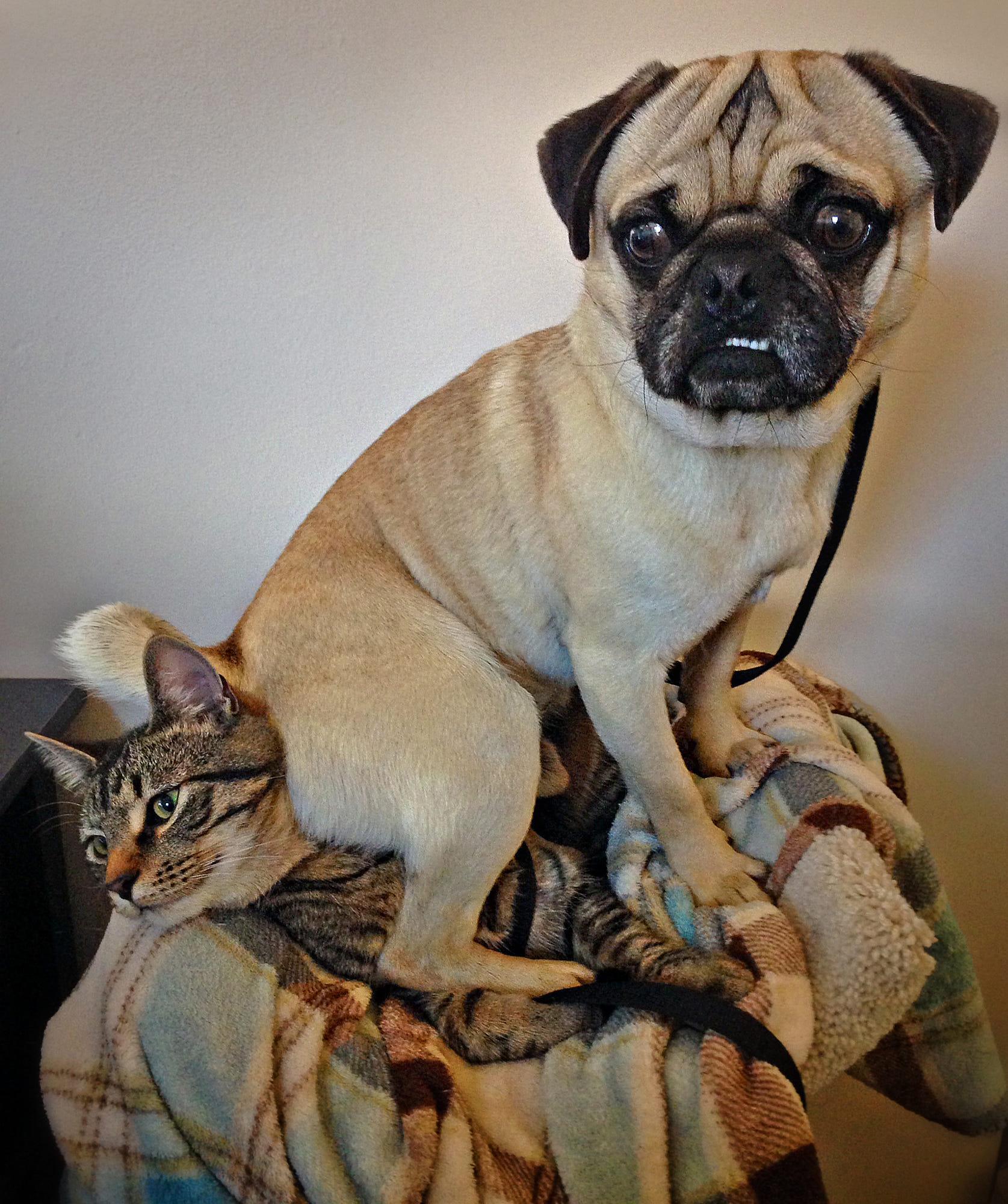 I don\'t always sit on cats, but when I do I sit on Miles.  :)