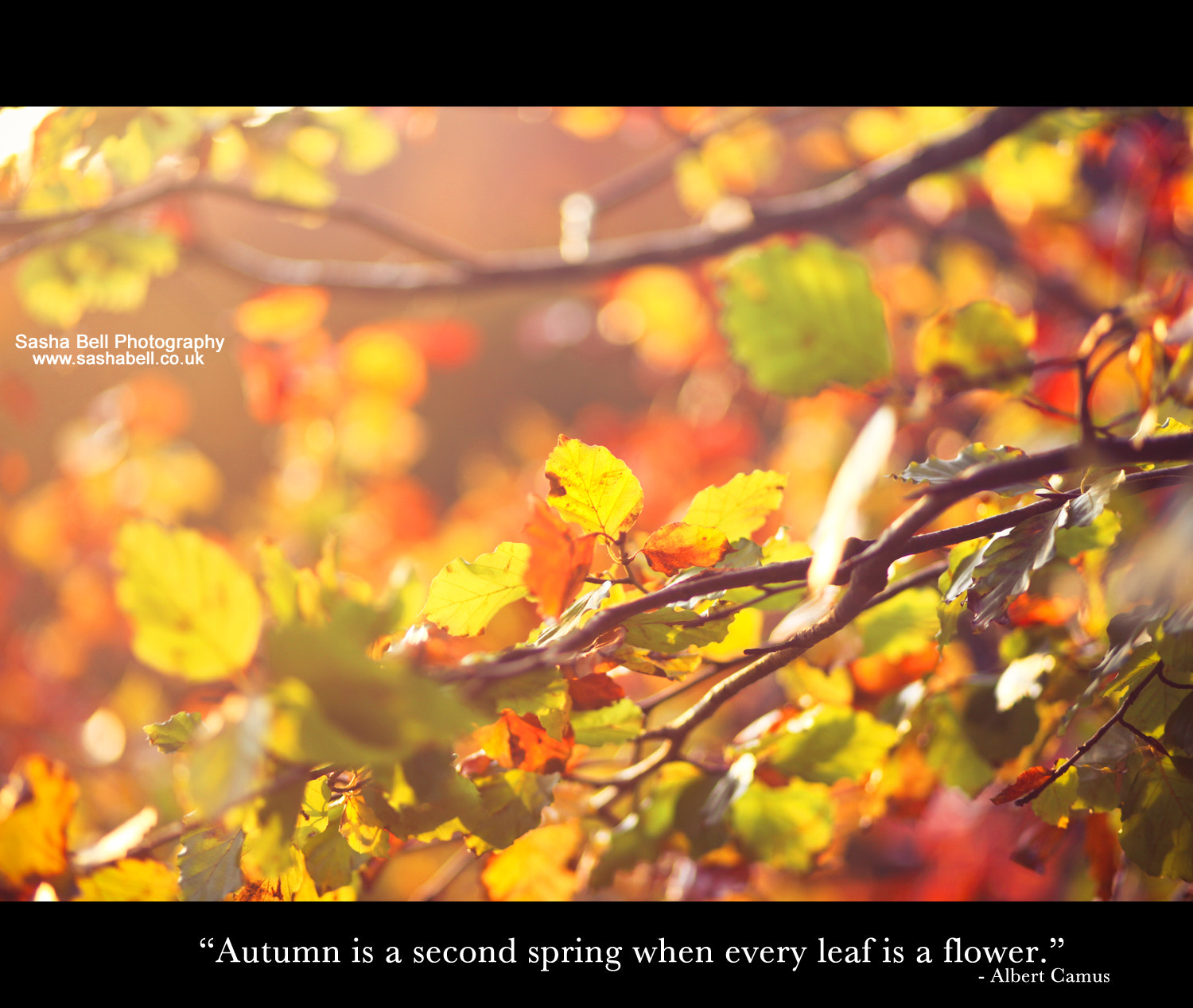 "Photograph ""Autumn is a second spring when every leaf is a flower"" by Sasha L'Estrange-Bell on 500px"