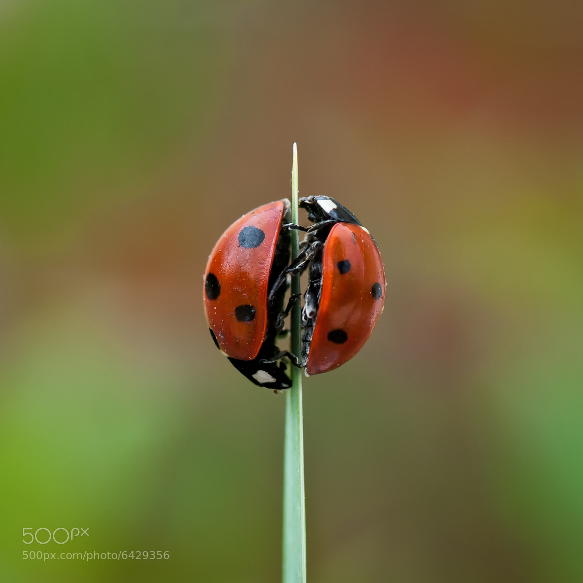 Photograph Sex & the Garden by Patrick Guillon on 500px