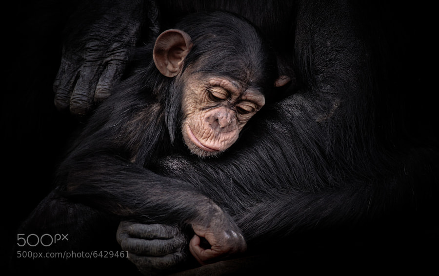 Photograph Protected by Natalie Manuel on 500px