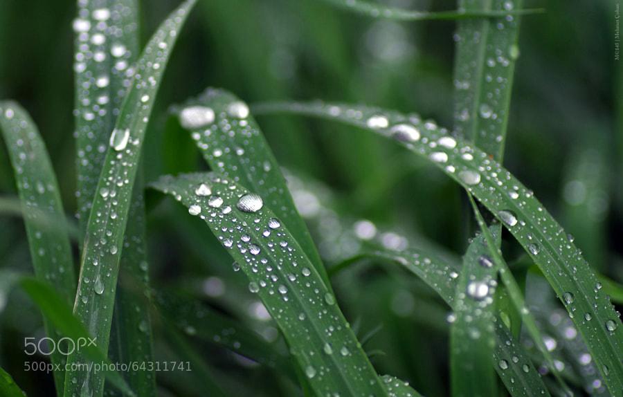 Photograph Abundance of rain by Mehmet Çoban on 500px