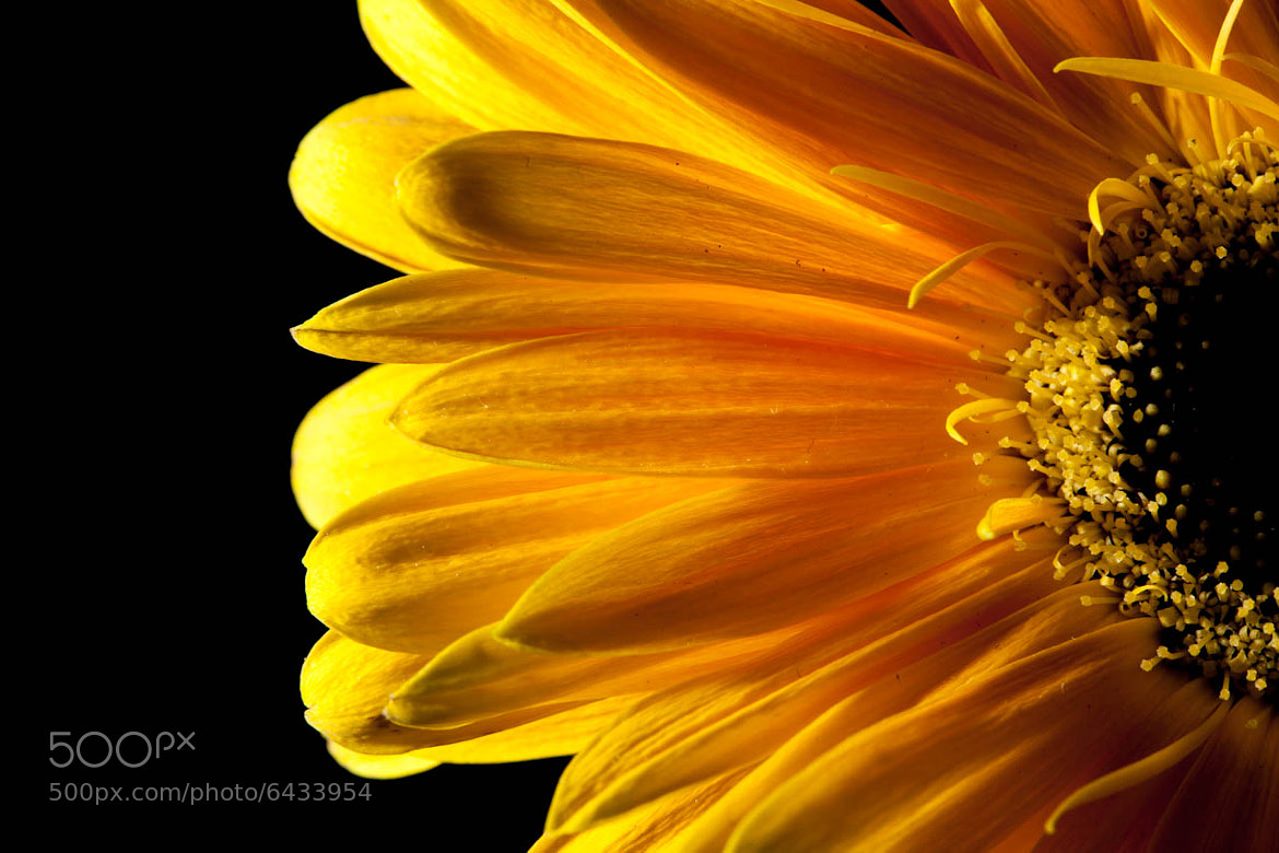 Photograph Yellow by Jon Leirdal on 500px