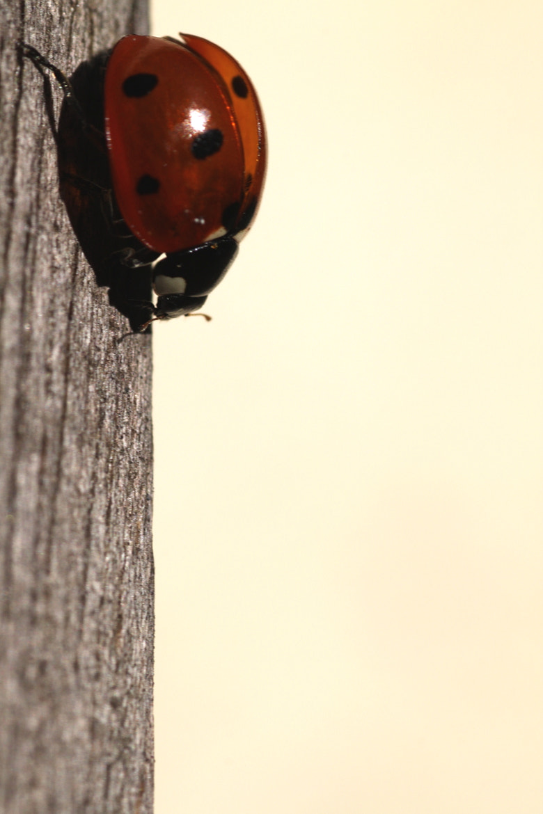 Photograph The Ladybird by Alexandre BLANCHARD on 500px
