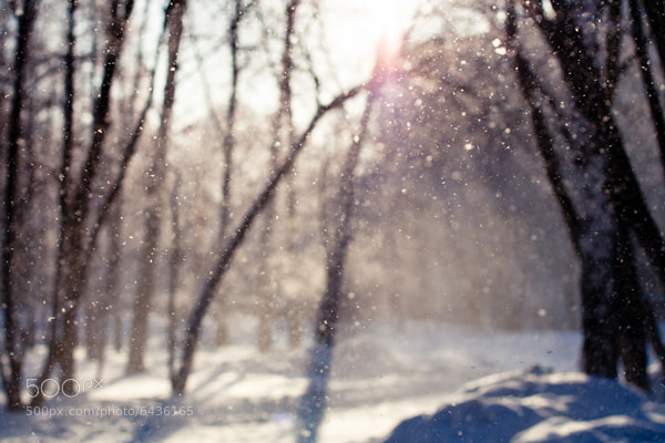 Photograph snow by Slava Ryabukhin on 500px