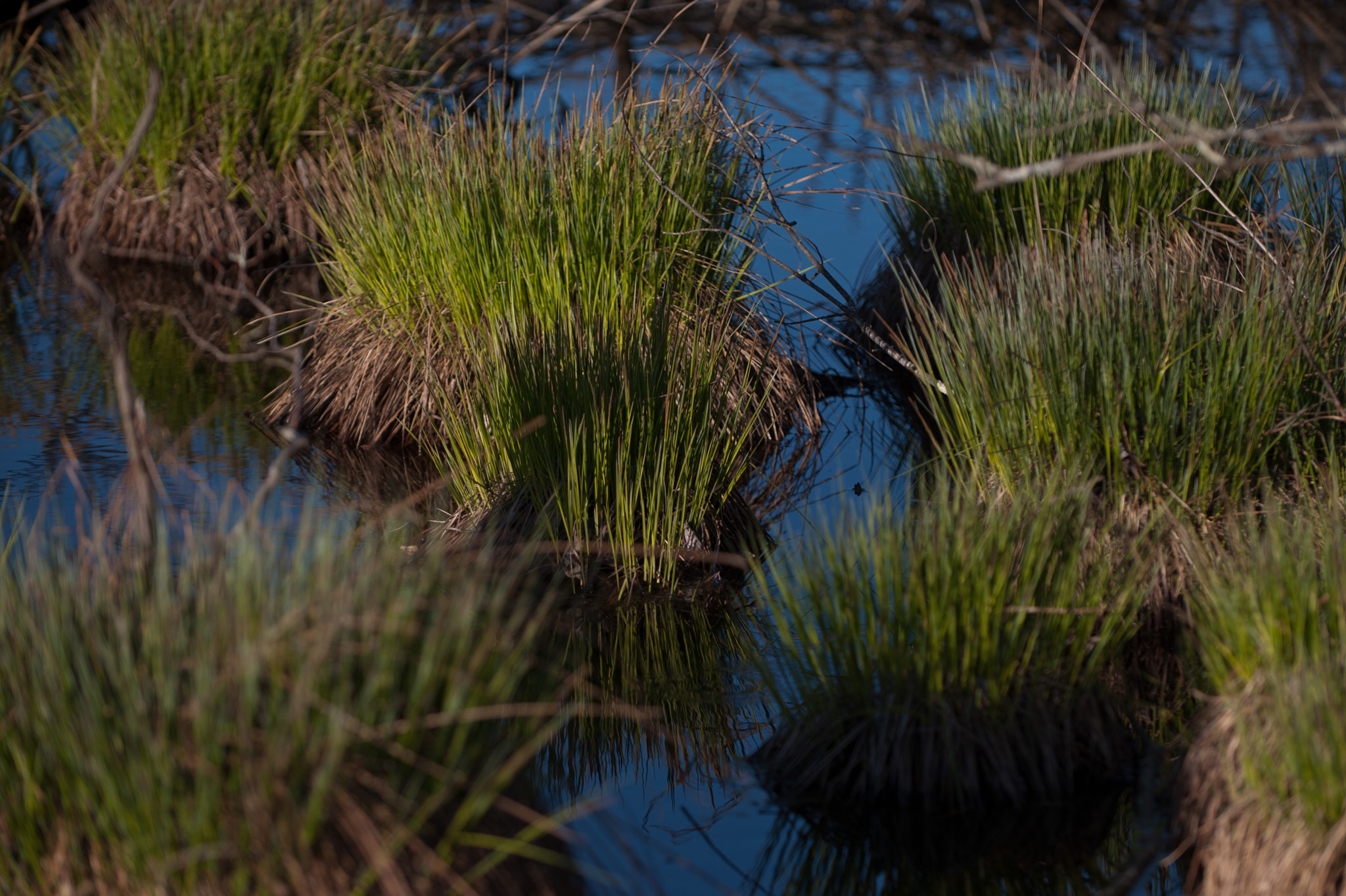 Photograph Wet grass by Marilyn Sonnie on 500px