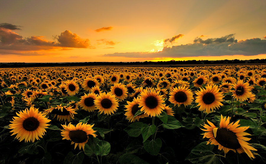 Field of Suns de Andreas Jones sur 500px.com
