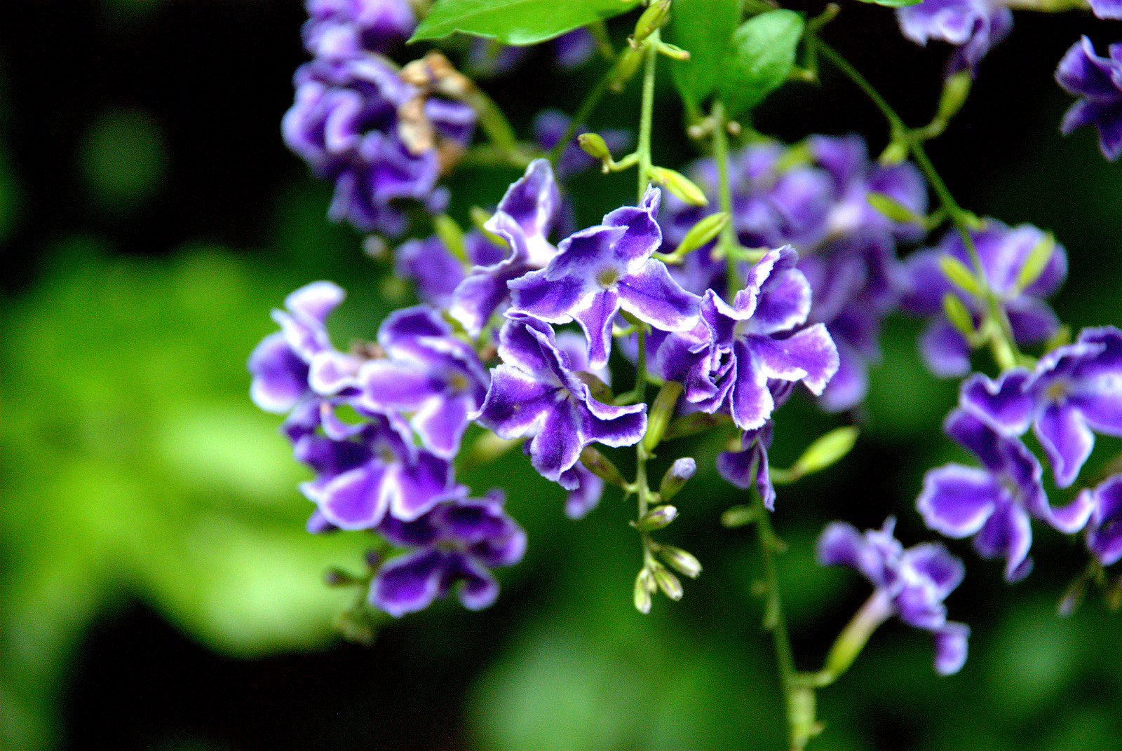 Photograph Purplez by Afrin Catalano on 500px