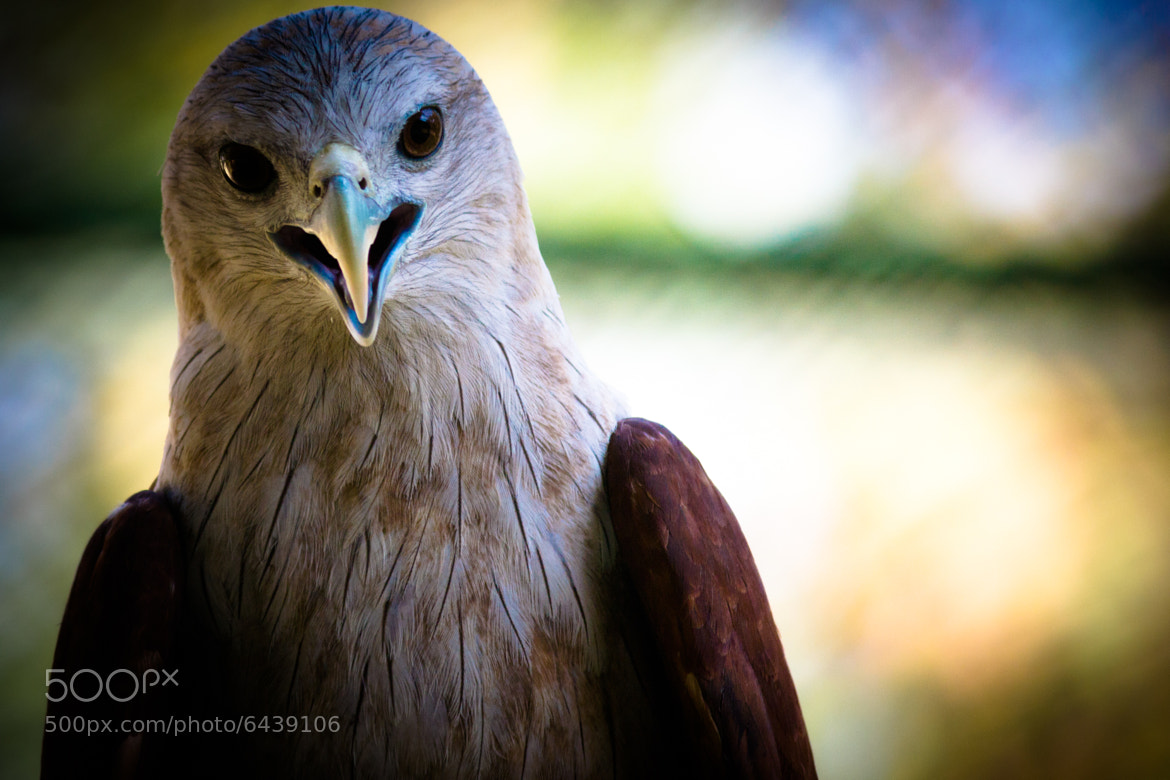 Photograph Posing Kite by MR  on 500px