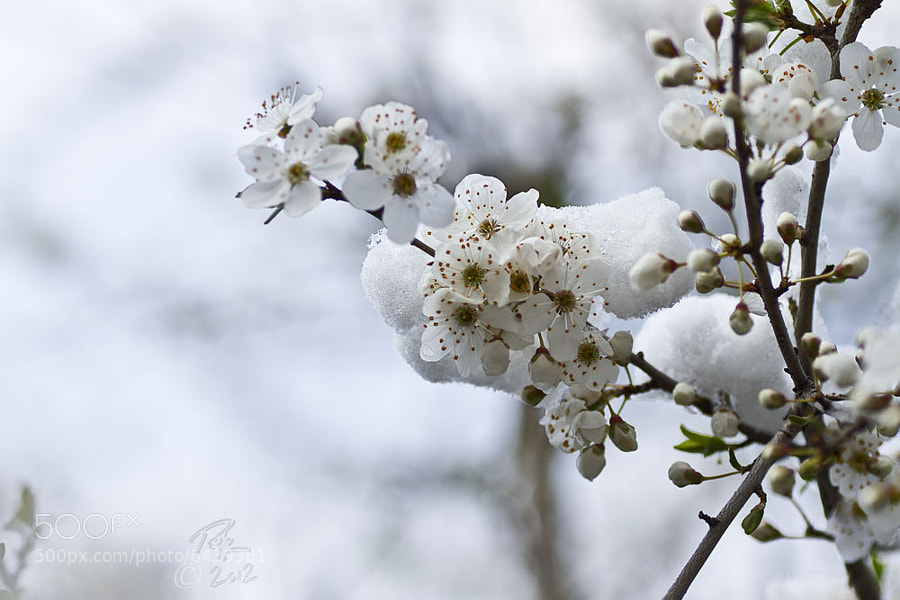 Photograph Winter onto spring by Benno Pütz on 500px