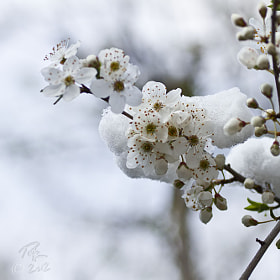 Winter onto spring by Benno Pütz (bpfoto)) on 500px.com