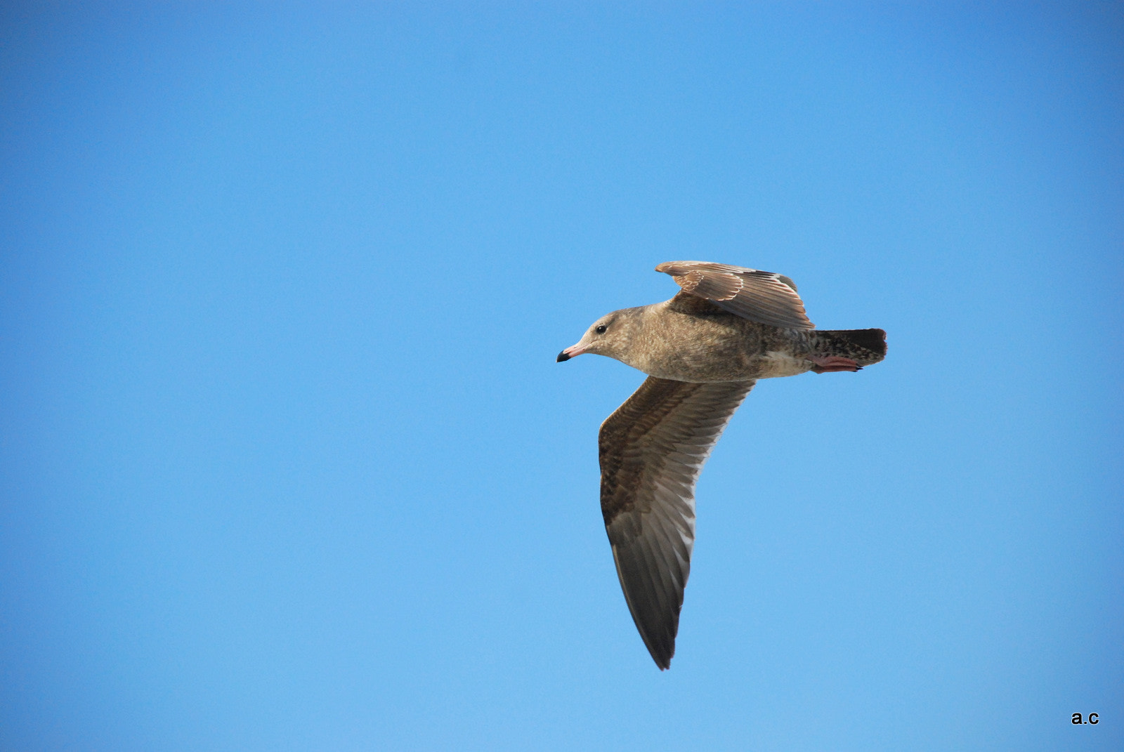 Photograph Seagull by Afrin Catalano on 500px