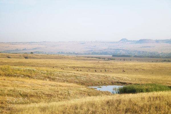 Photograph steppe by Slava Ryabukhin on 500px