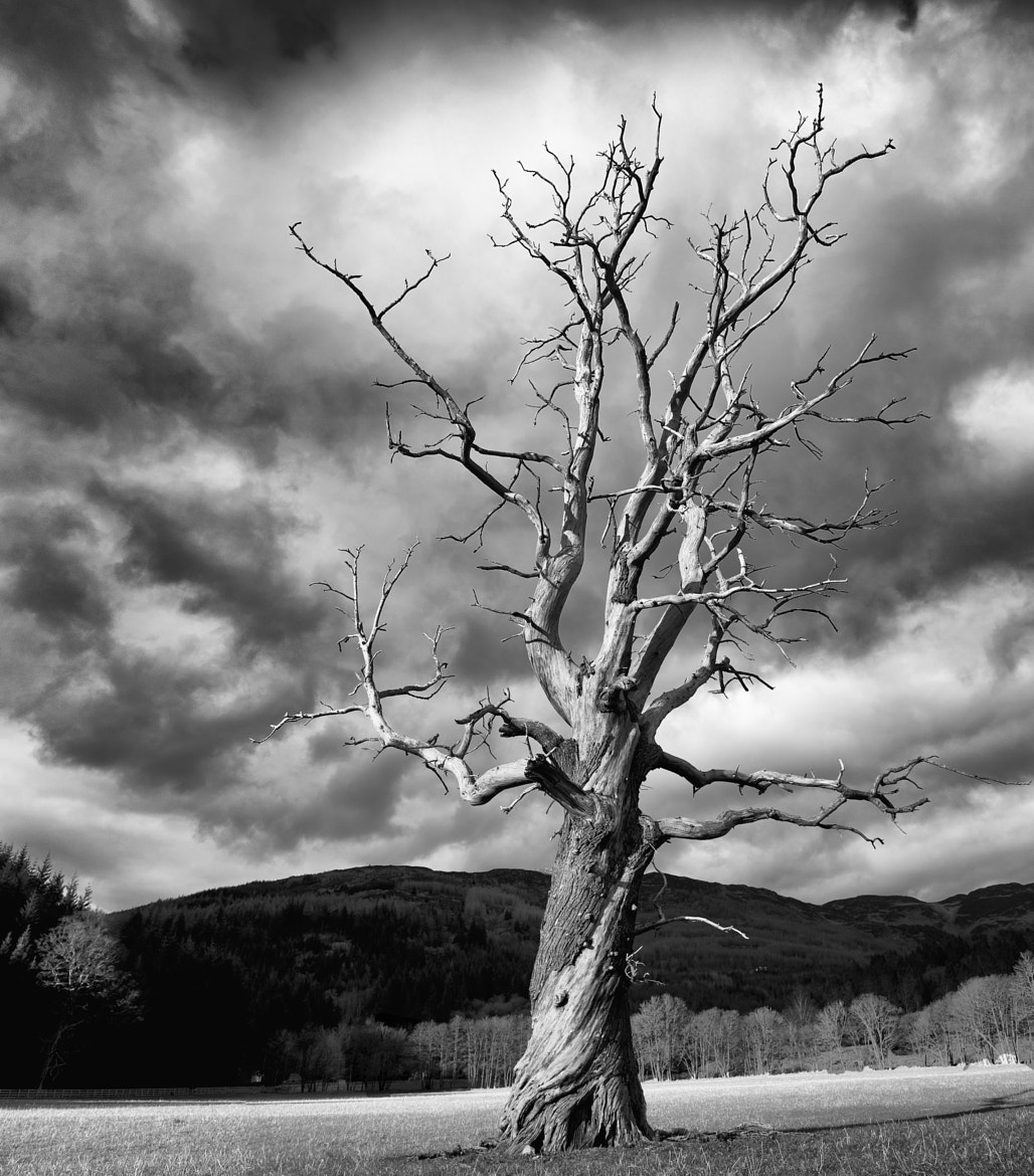 Photograph St Fillans Tree by Richard Hunter on 500px