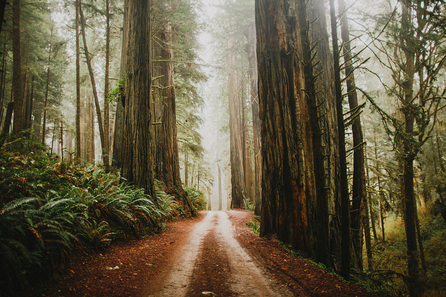 Photograph redwoods by Sara K Byrne on 500px