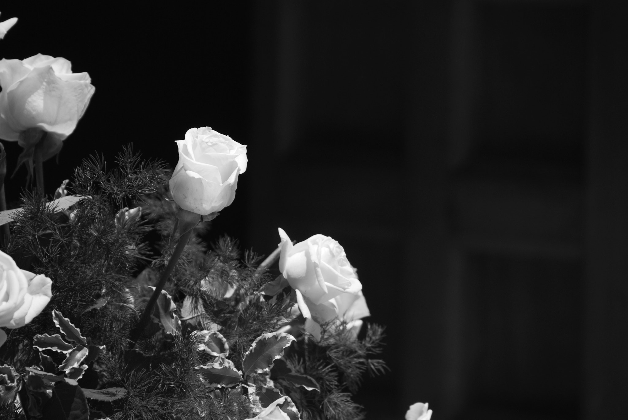Photograph White Roses by Paolo Costa on 500px