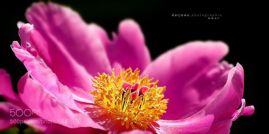 Photograph sunny heart by Jean Darveau on 500px