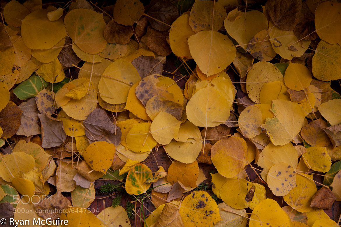 Photograph New England Fall by Ryan McGuire on 500px