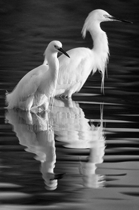 Photograph Two Of A Kind by Donna Eaton on 500px
