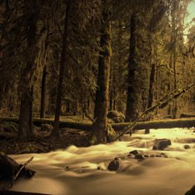 Photograph Forest Creek by Guðmundur Kári Stefánsson on 500px