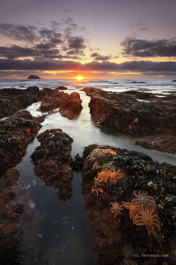 Photograph Starfish Sunset by Chris Gin on 500px