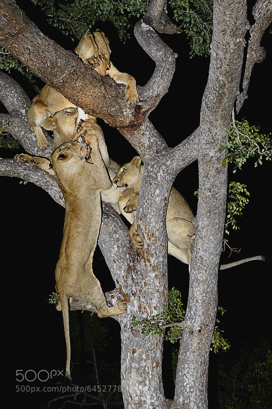 Photograph Tree Meal by Andrew Schoeman on 500px