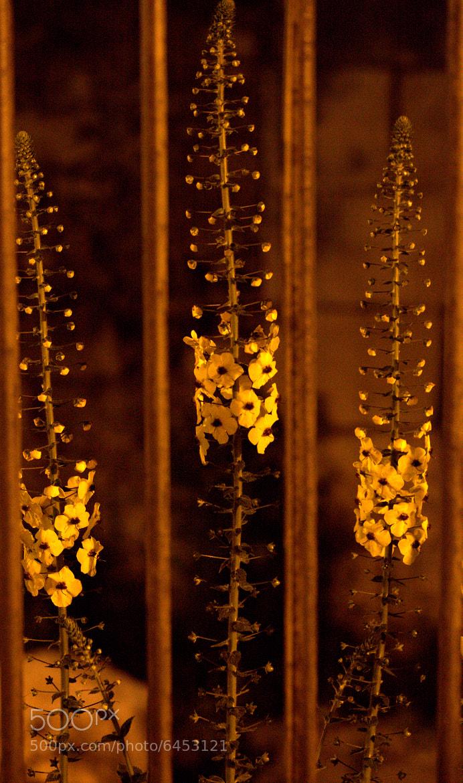 Photograph Night and spring by Selahattin Nizam on 500px