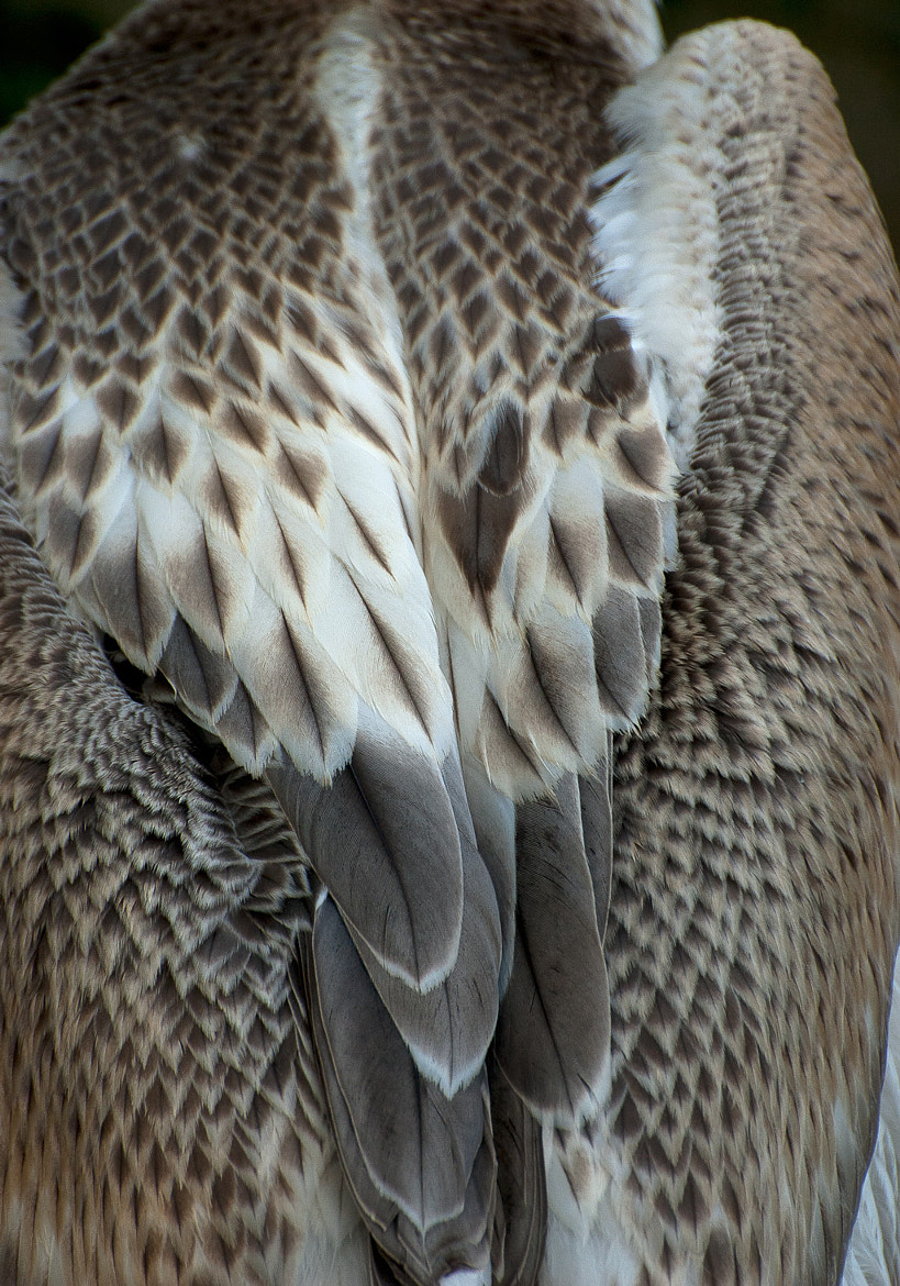 Photograph Feathers by Christina Skov on 500px