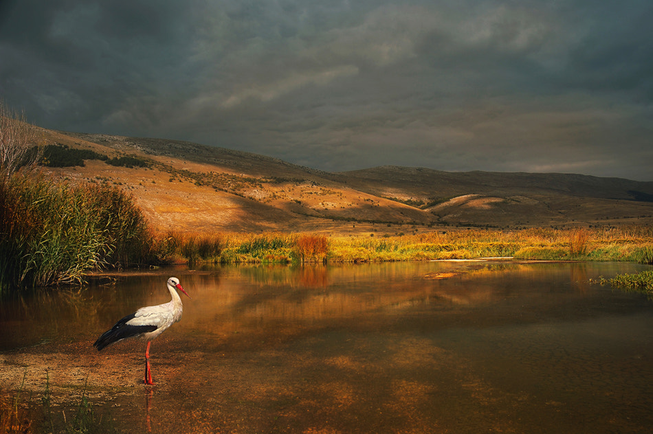 Photograph Wild marshes by Silvia S. on 500px