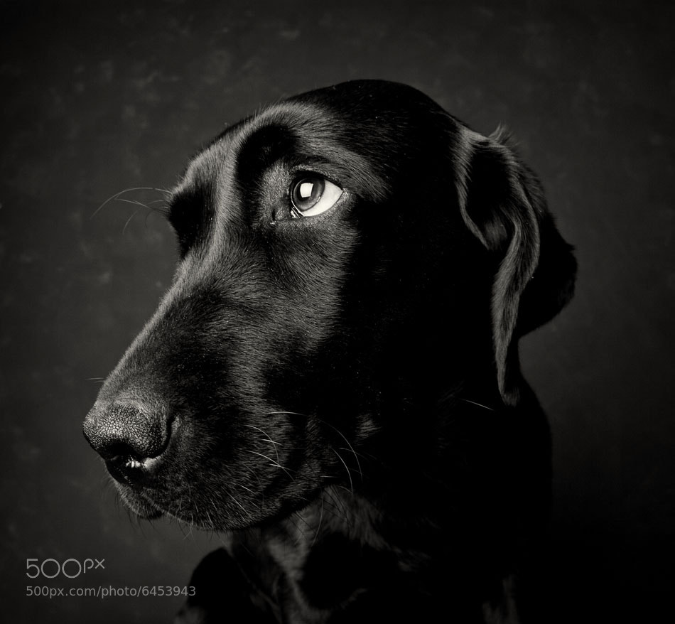 Photograph sad day by Martin Waldbauer on 500px