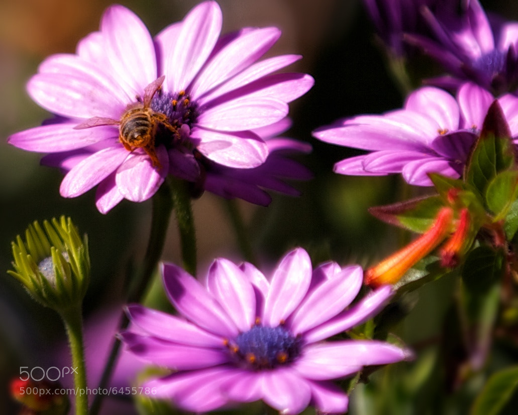 Photograph GOTW - IMG_7804 by Jeff Vaillancourt on 500px