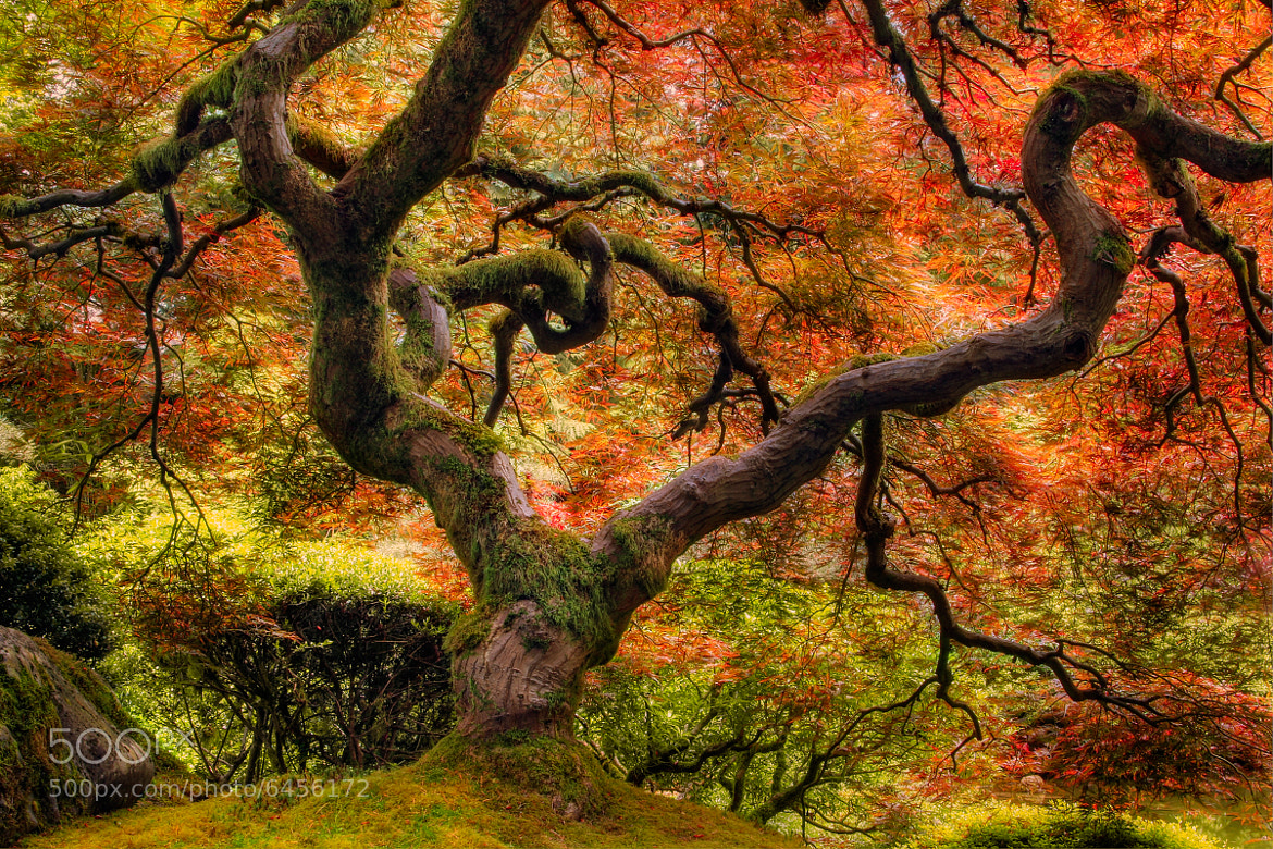 Photograph Under That Maple by Jonathan Hoomes on 500px