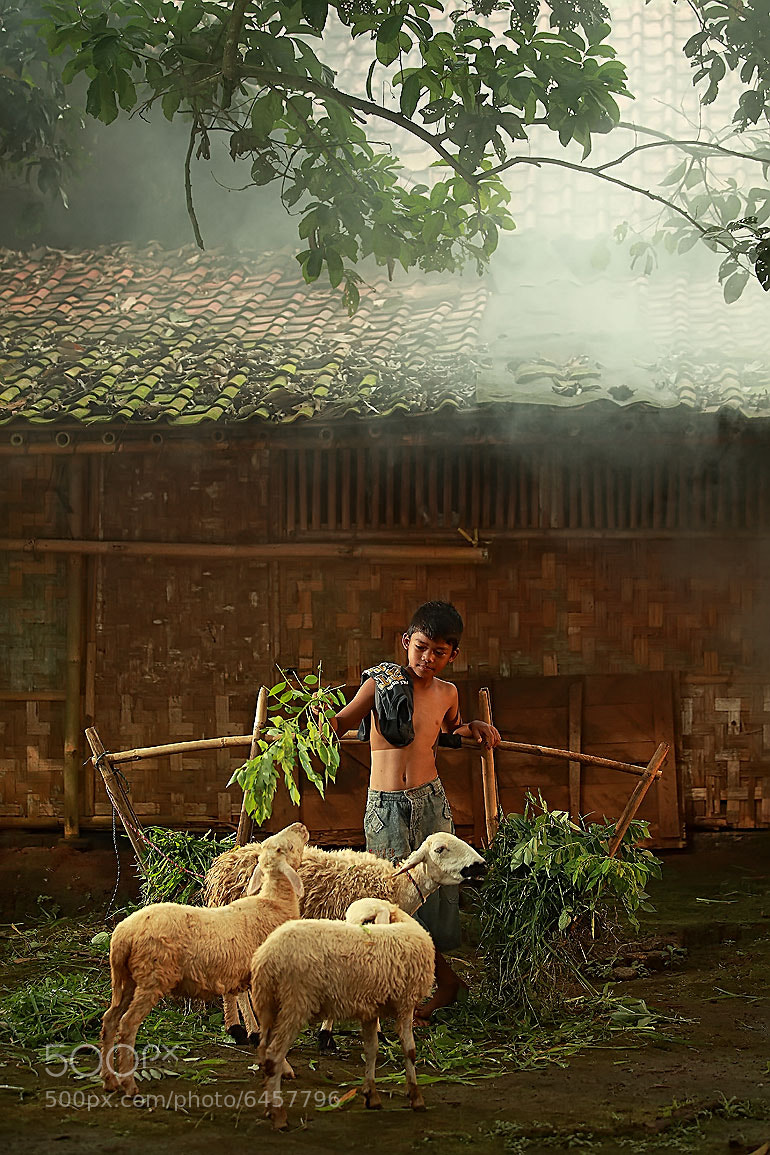 Photograph Feeding Sheeps In the Morning by Rizal Arnex on 500px