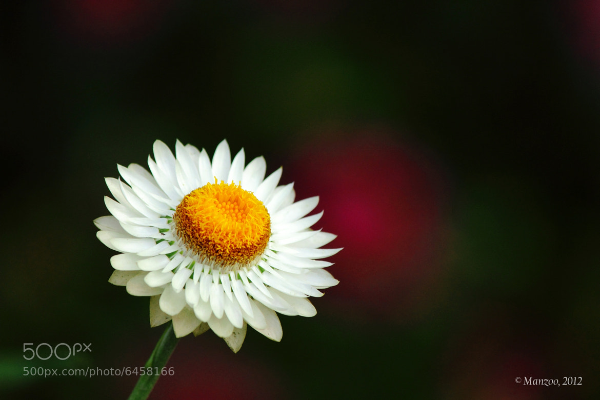 Photograph Bloom by Manjunath Undi on 500px
