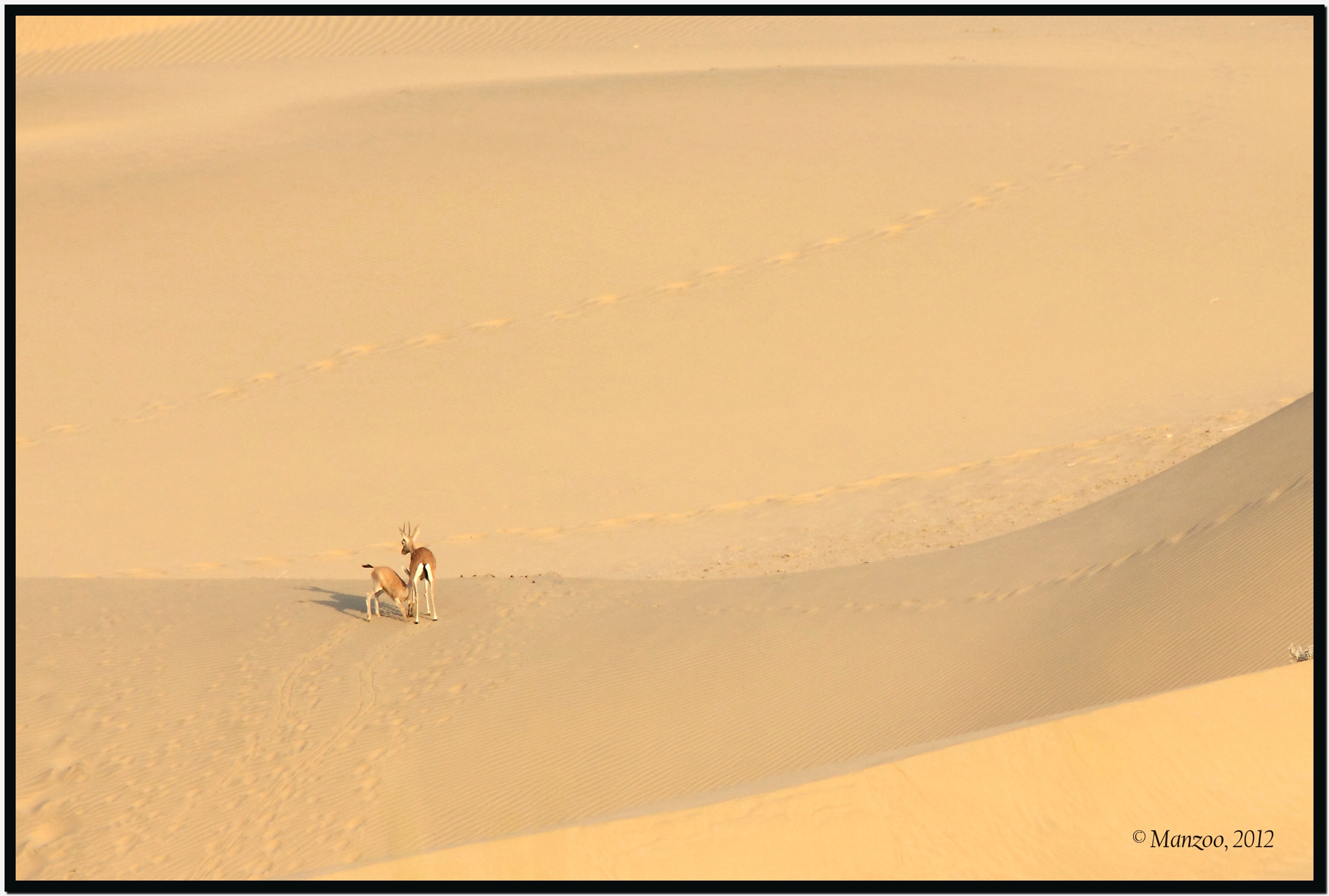 Photograph Snack time in the desert by Manjunath Undi on 500px