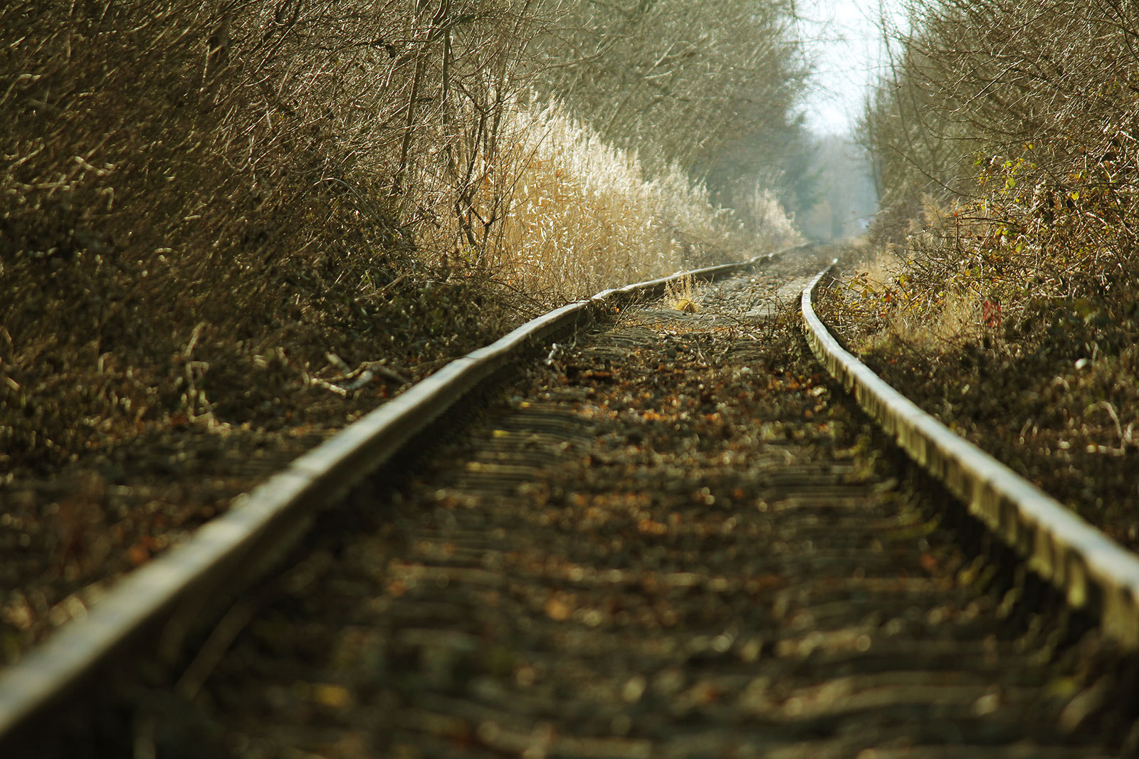 Photograph Ancient Rails by Nico Hirsch on 500px