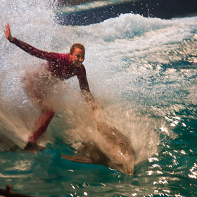 Riding the dolphins by E Roth (ERoth)) on 500px.com