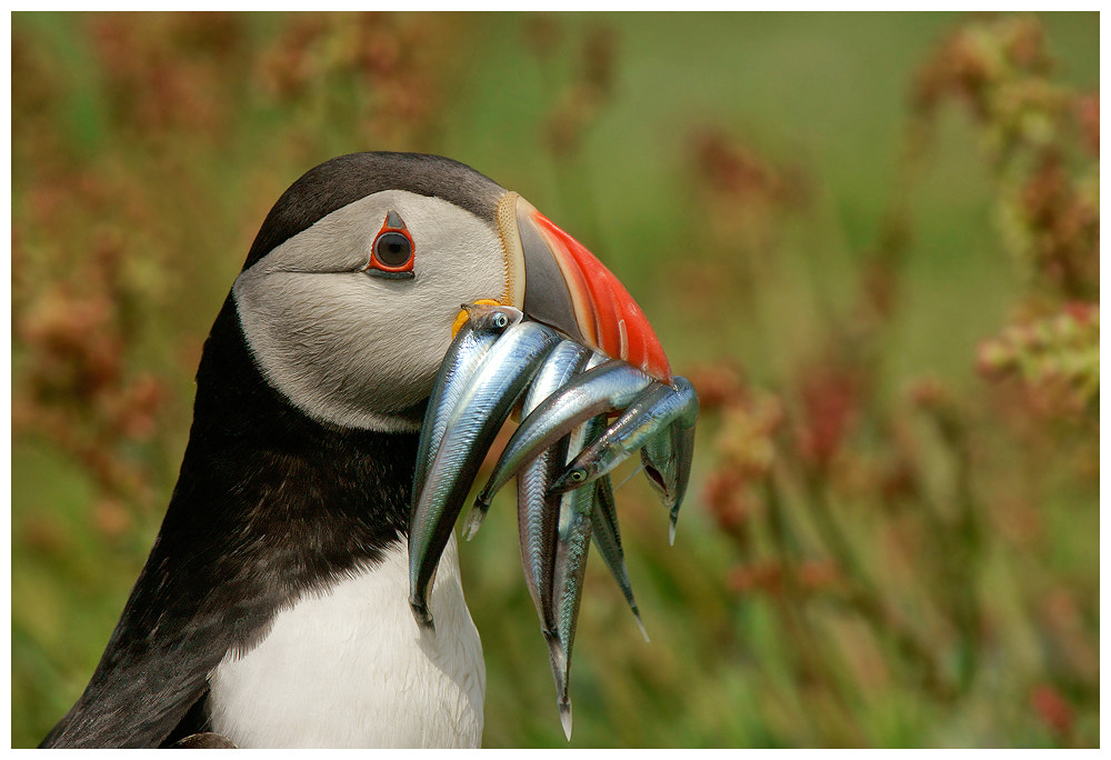 Photograph A good catch by Geoffrey Baker on 500px