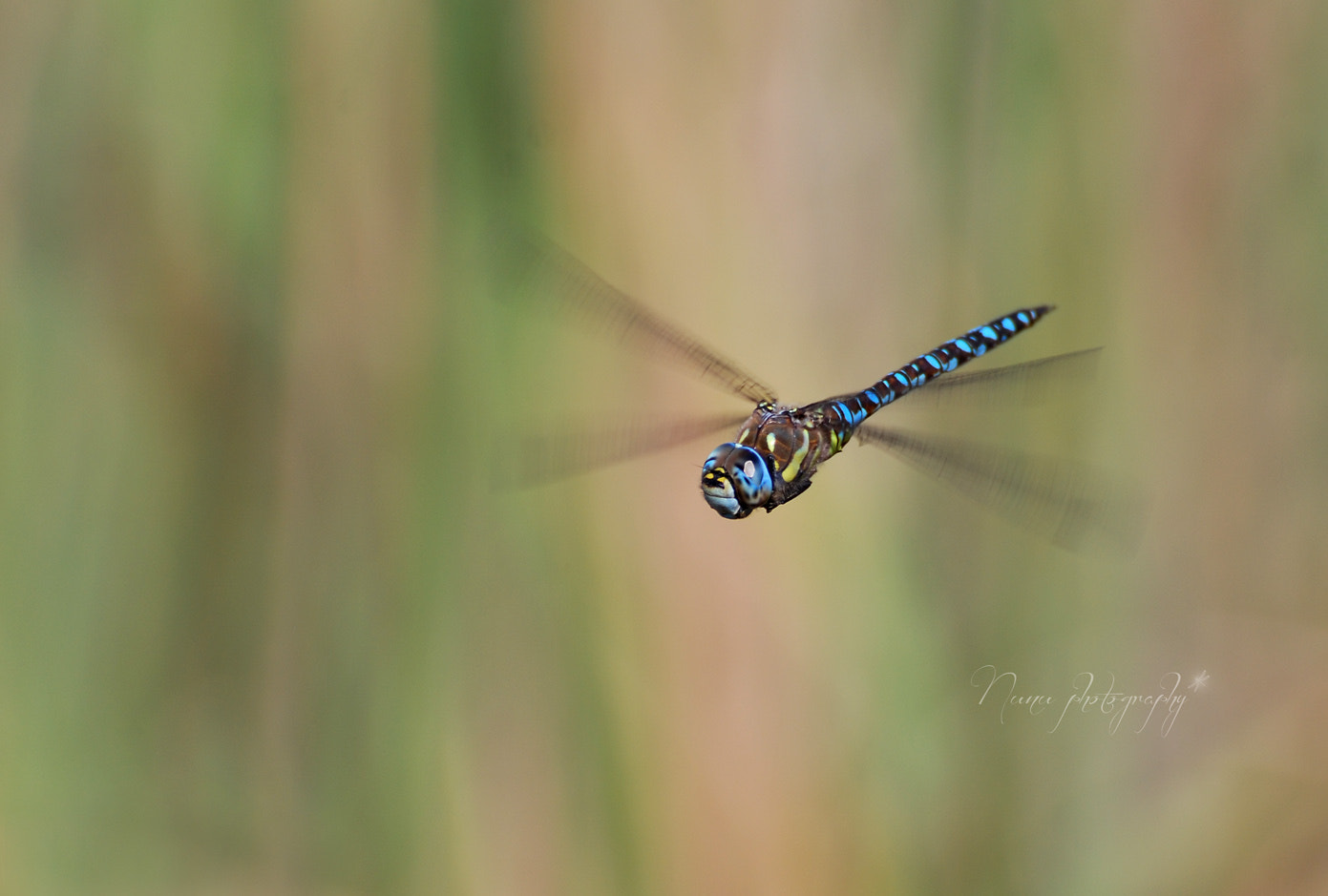 Photograph You can fly by Nunu Box on 500px