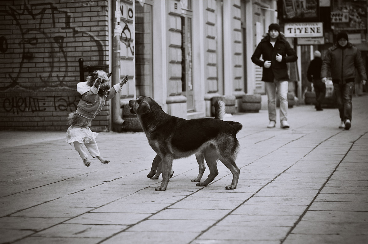 Photograph Funny dog by Nina Masic on 500px