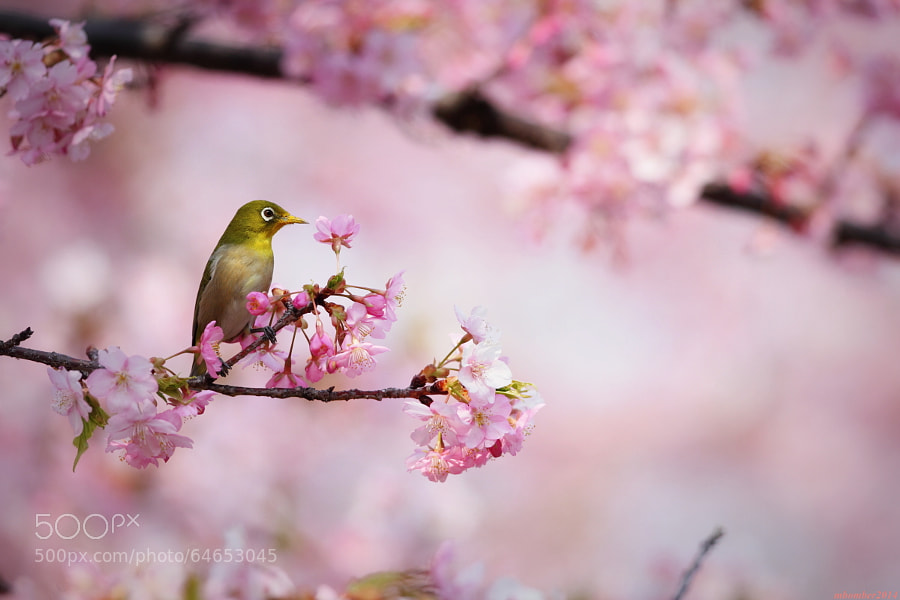 Photograph bird & kawazu 3 by mbomber2013  on 500px