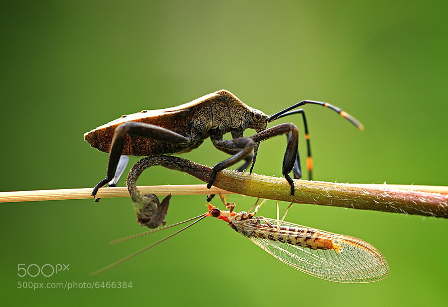 Photograph two way by shikhei goh on 500px