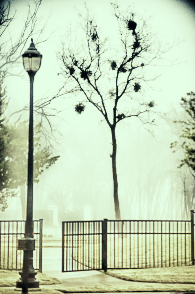 Photograph Foggy Lampost by Ron Guest on 500px
