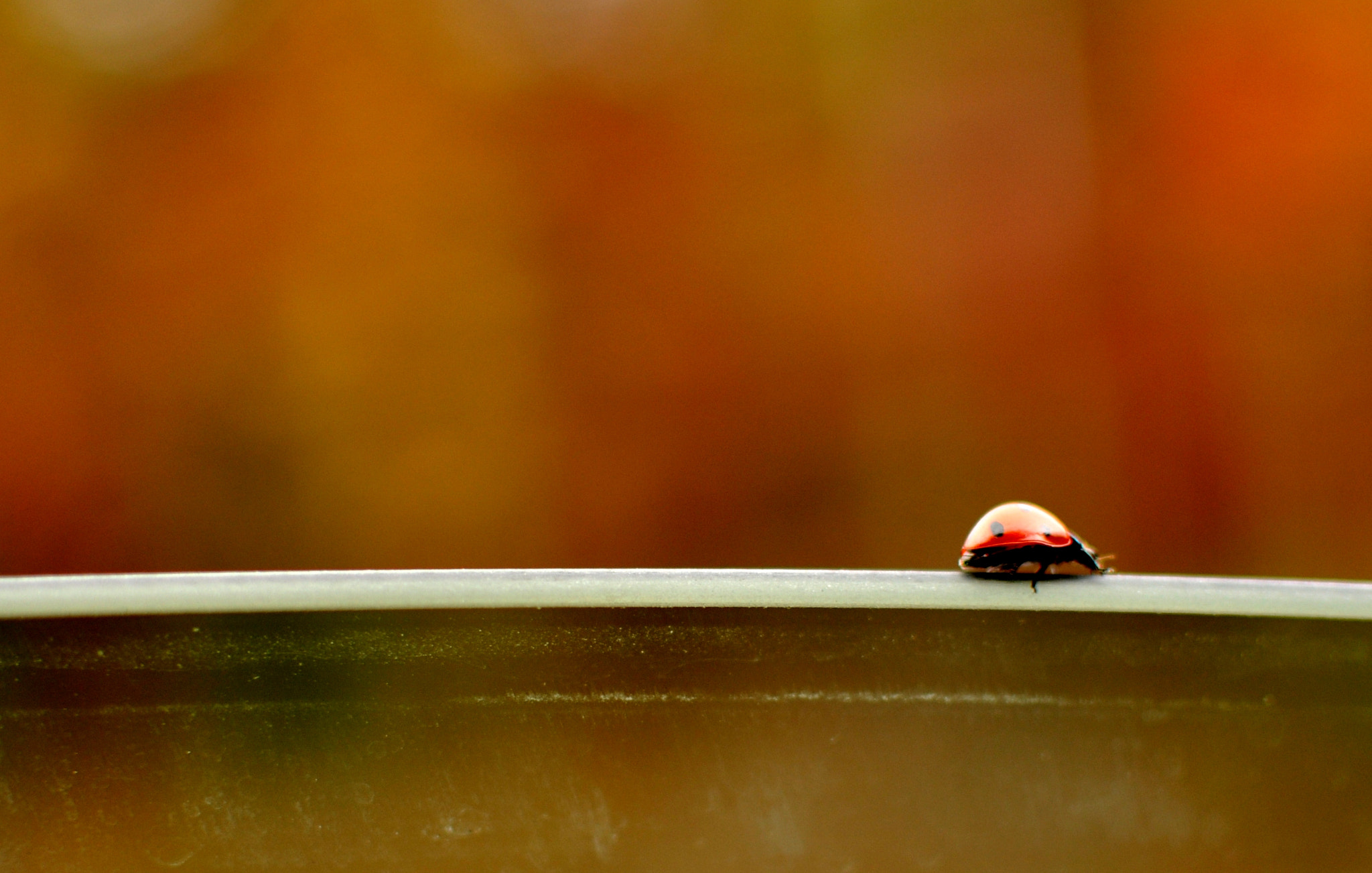 Photograph Miss Bug by Rohit Nair on 500px
