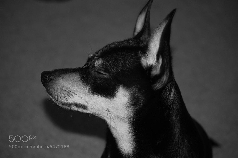 Photograph Mr. Mocha by Jory Haynes on 500px