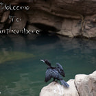 Постер, плакат: The Anhinga welcomes at Ranthambore