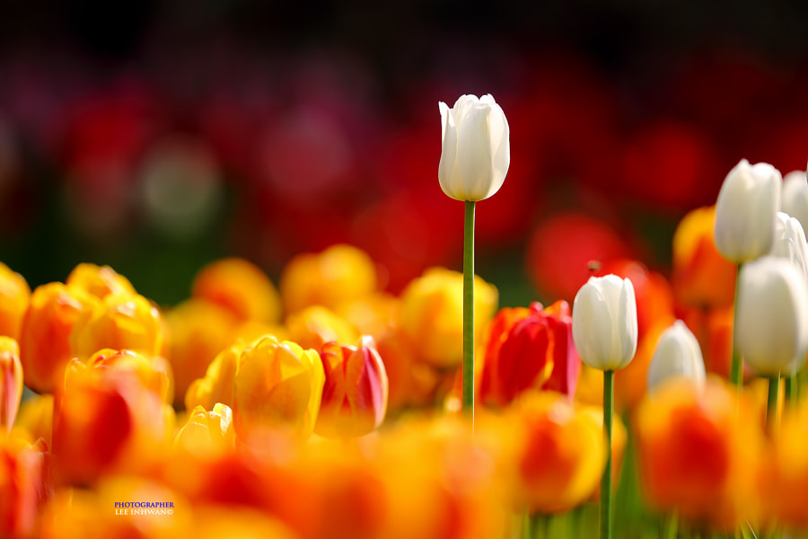 Photograph Spring fever of jealousy by LEE INHWAN on 500px