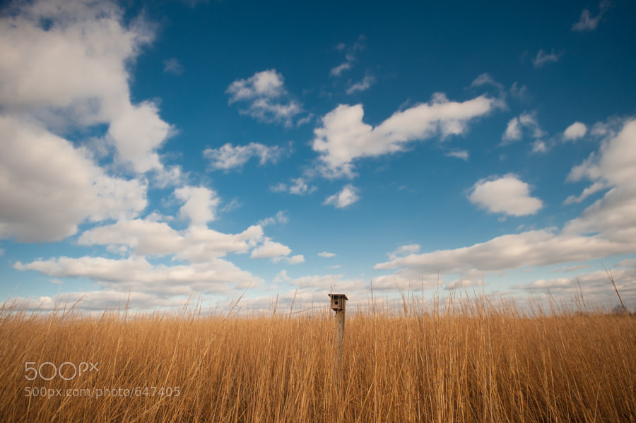 "This birdhouse peeking above the tall grasses reminded me of a periscope for some hidden ""field submarine'."